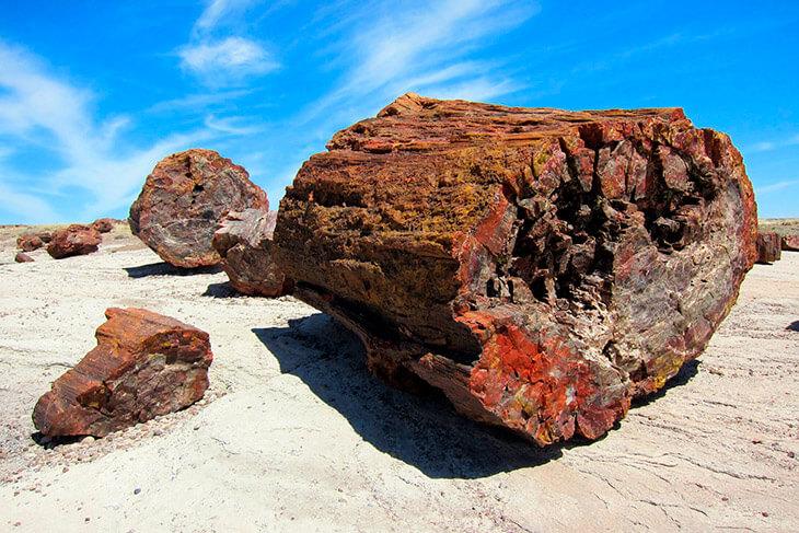 Как дерево становится камнем?